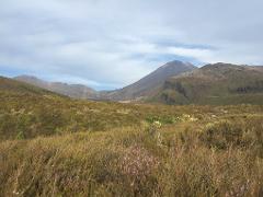 Tongariro Alpine Crossing / Owhango and National Park Village pick up (Return)