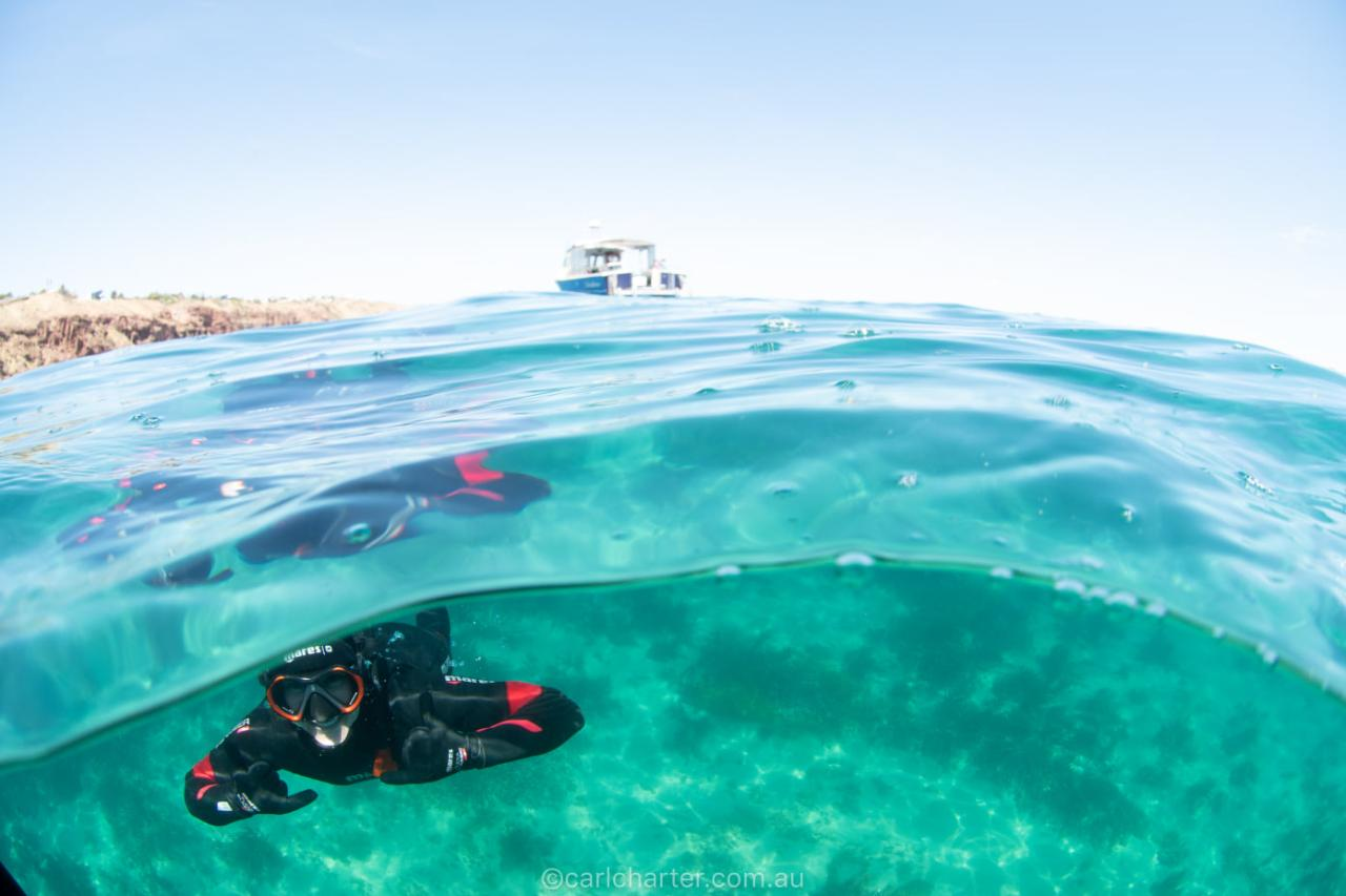 GIFT CARD Snorkel BOAT Tour - Port Noarlunga Outer Reef Sanctuary Zone & Marino Rocks