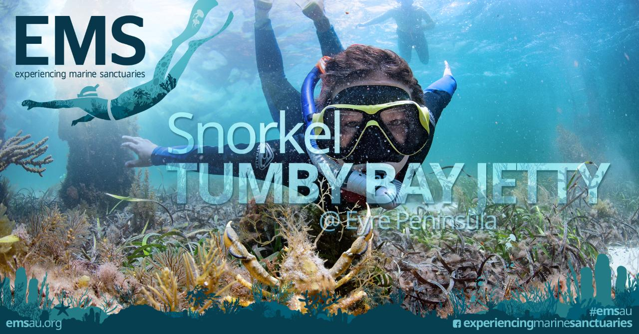Snorkel with Seadragons at Tumby Bay Jetty on Eyre Peninsula