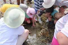 Rock Pool & Reef Ramble Kingston Park 23rd October