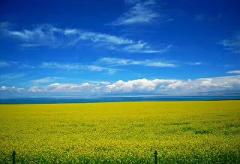 Qinghai Lake Adventure, 4 nights/ 5 days