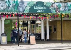 Visit London Zoo & See 30+ London Top Sights