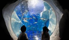 Visit The Sea Life Aquarium & See 30+ London Top Sights