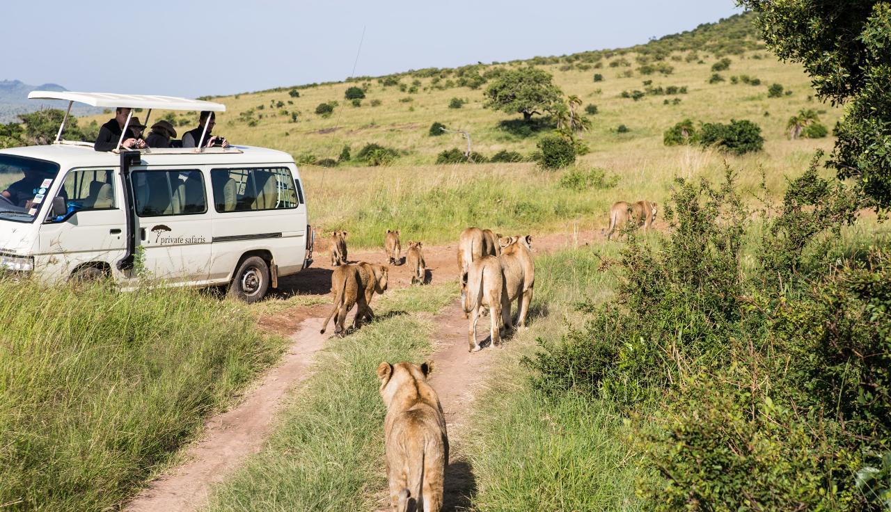 7 Days Masai Mara – Lake Nakuru – Lake Naivasha – Amboseli