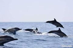 Dolphin Watching from Alvor