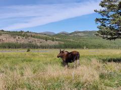Exclusive Experience at Yukon Wildlife Preserve