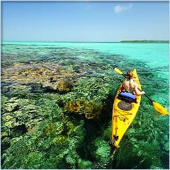 Kayak & Paddle Board