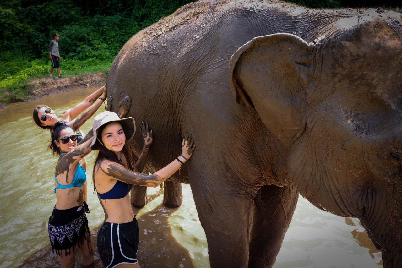 Pattaya's Ethical Choice: Elephant Jungle Sanctuary