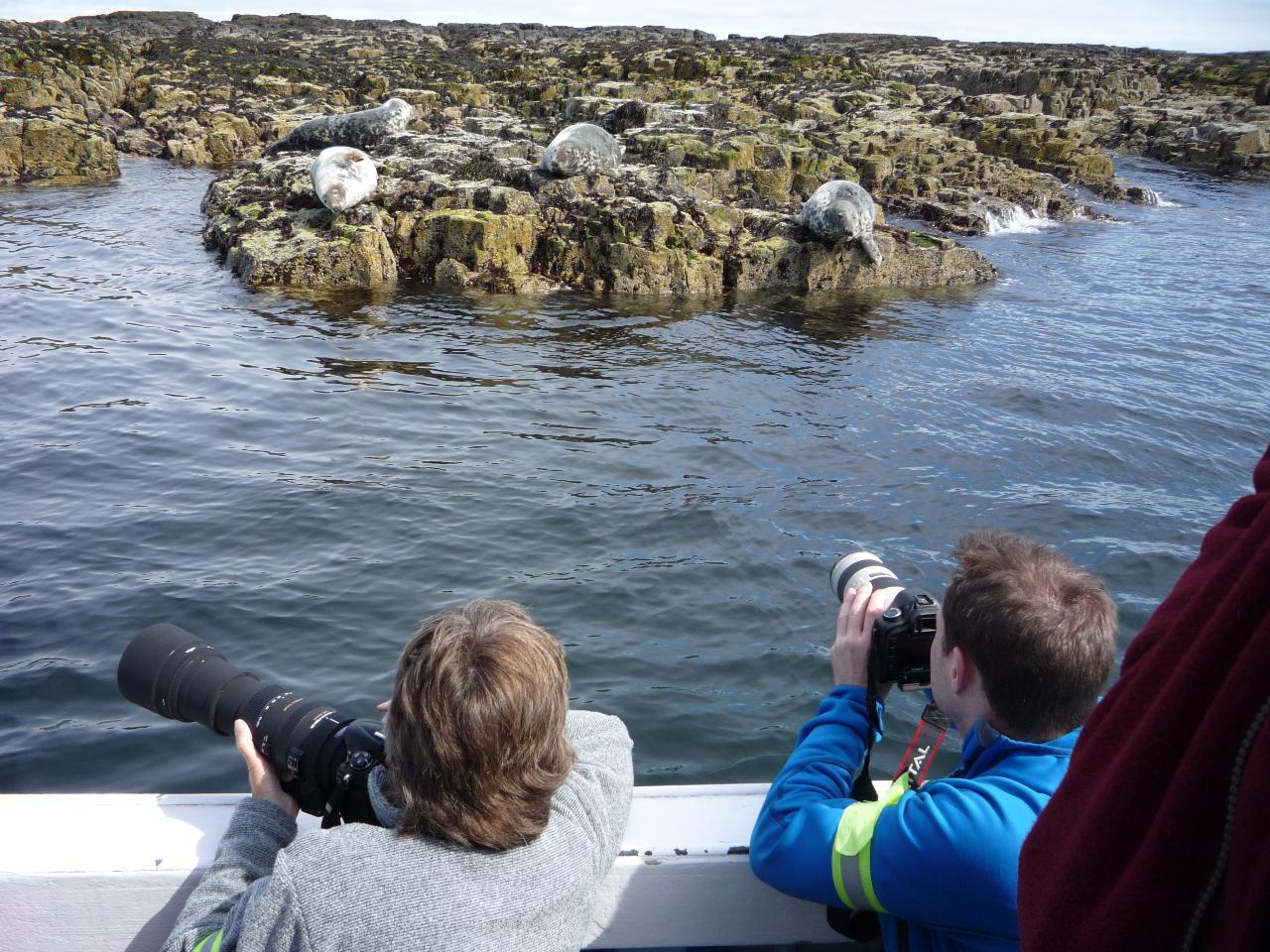 Grey Seal Cruise