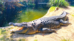Hartley's Crocodile Adventures (Transfers Included from Cairns)