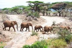4 Days Budget Lodge Safari Tour Tanzania 1,600 usd