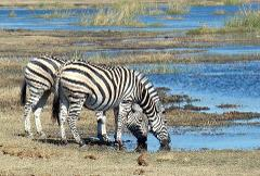 2 Days Budget Camping Safari Tour Tanzania 500 usd