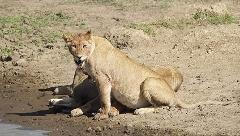 6 Days Budget Camping Safari Tour Tanzania 1,800 usd