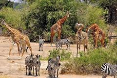 5 Days Budget Camping Safari Tour Tanzania 1,500 usd