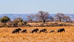 5 Days Budget Mid-range Safari Tour Tanzania 1,750 usd