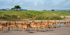 7 Days Budget Camping Safaris Tour Tanzania