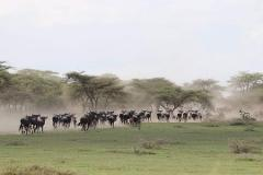7 Days Budget Mid-range Safari Tour Tanzania