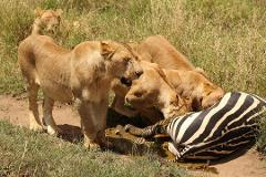 3 Days Budget Camping Safari Tour Tanzania 900 usd