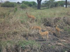 8 Days Budget Mid-range Safari Tour Tanzania