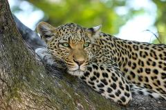 6 Days Budget Lodge Safari Tour Tanzania