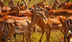 4 Days Budget Mid-range Safari Tour Tanzania 1,400 usd
