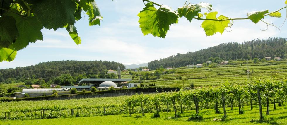 From Porto: The great experience in the green wine region. Alvarinho Wine