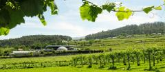 From Porto: The great experience in the green wine region. Alvarinho Wine