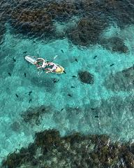 Marine Life Tour Choice of Clearyak OR Snorkel - pick-up & return Auckland