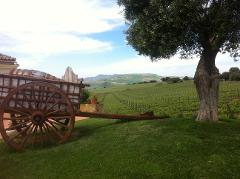 Private Wine Tour of Ronda