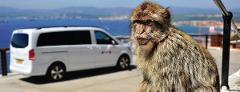 Gibraltar Private Tour