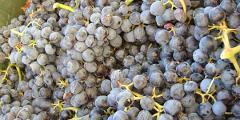 Private Wine Tasting in Marbella