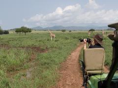 14 Days Best Of Uganda Safari