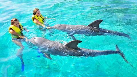 Dolphin Action Swim
