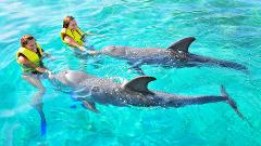 Dolphin Action Swim