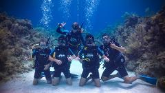 Dolphin Scuba Summer Camp