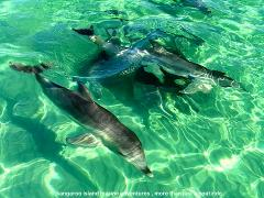 Island Explorer Tour (incl. Dolphin Swim) 1st December - 31 March (Emu Bay Depature)