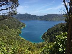 Queen Charlotte Track - Four Day Independent Walk