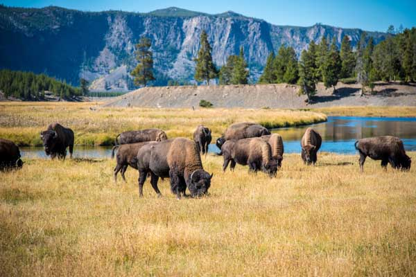 SS - Summer - Yellowstone Lower Loop Full Day - PRIVATE