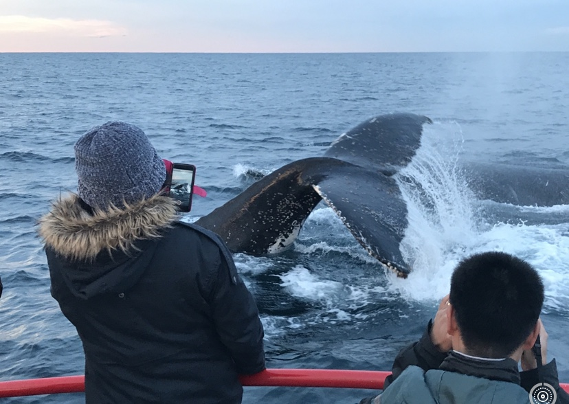 90 minute Whale Watch Express
