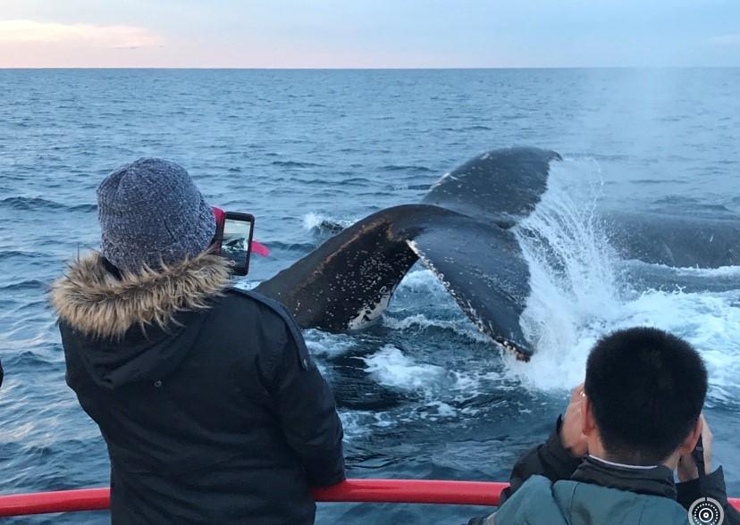 90 minute Whale Watch Express - Gift Voucher