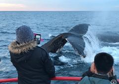90 minute Whale Watch Express - Gift Voucher