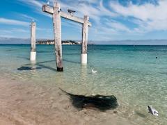 Hamelin Bay Adventure