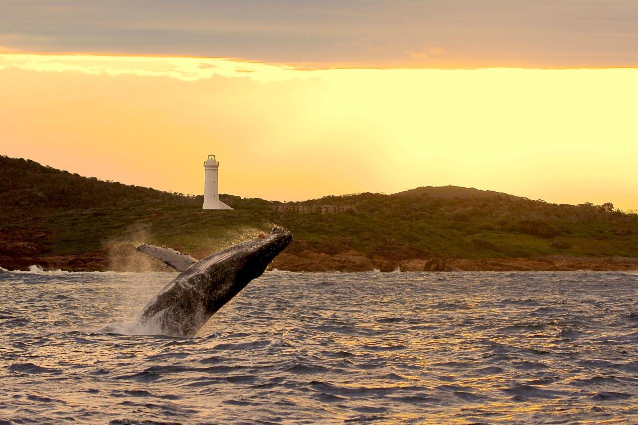 IMAGINE - 3 Hour Whale Watch Cruise