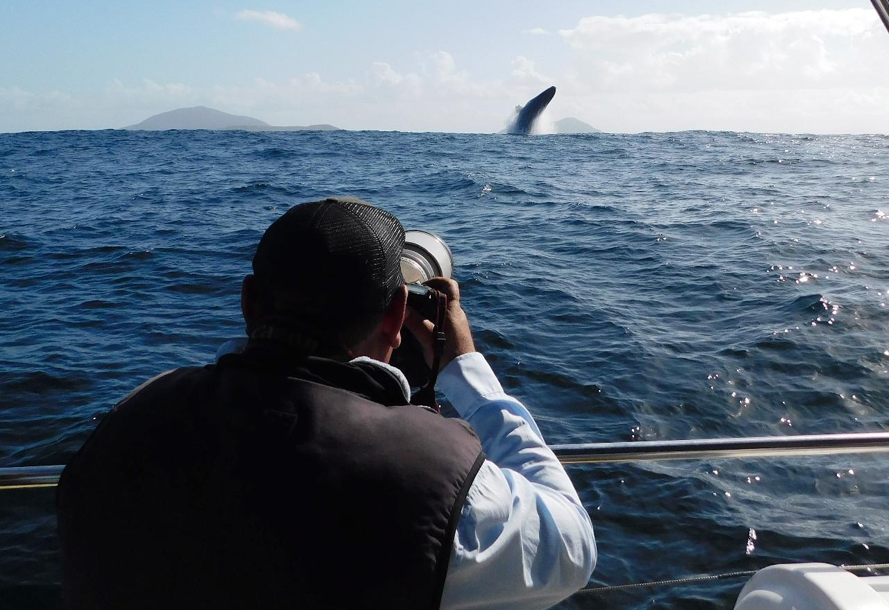 Peter Lorimer's Focus: Whale Tutorial