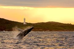 3 Hour Whale Watch Cruise - Gift Voucher