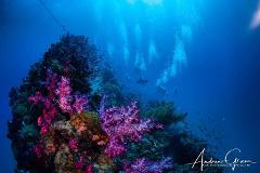 Yongala Day Trip - Certified Diver