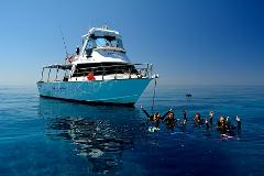 Great Barrier Reef Day Trip - Snorkeling or Discover Scuba