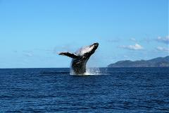 Whale Watching and Wildlife Cruise