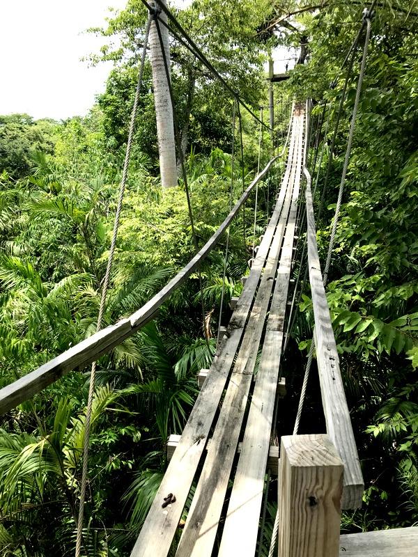 Altun Ha Maya and Zip Line  Shore Excursion