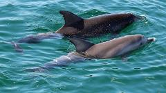 Early Bird  Dolphin Tour